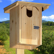 American Kestrel nestbox