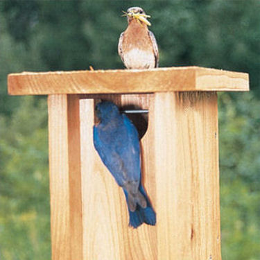Gilwood Bluebird nestbox