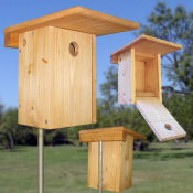 Xbox nestbox for Bluebirds